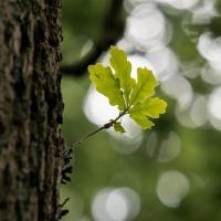 Gründonnerstag: Gemeinschaft soll grünen